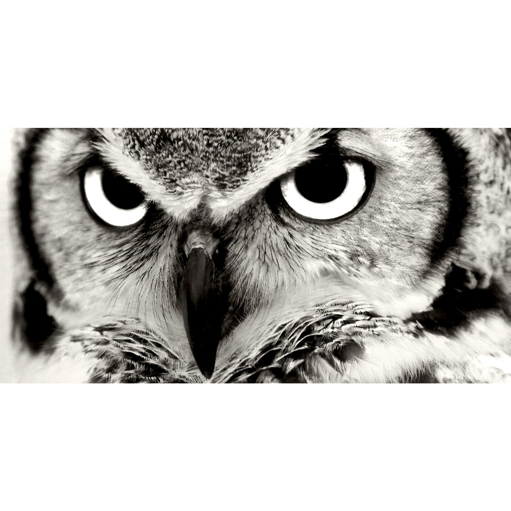 PhotoInc Fotoprint - Owl og blind ramme
