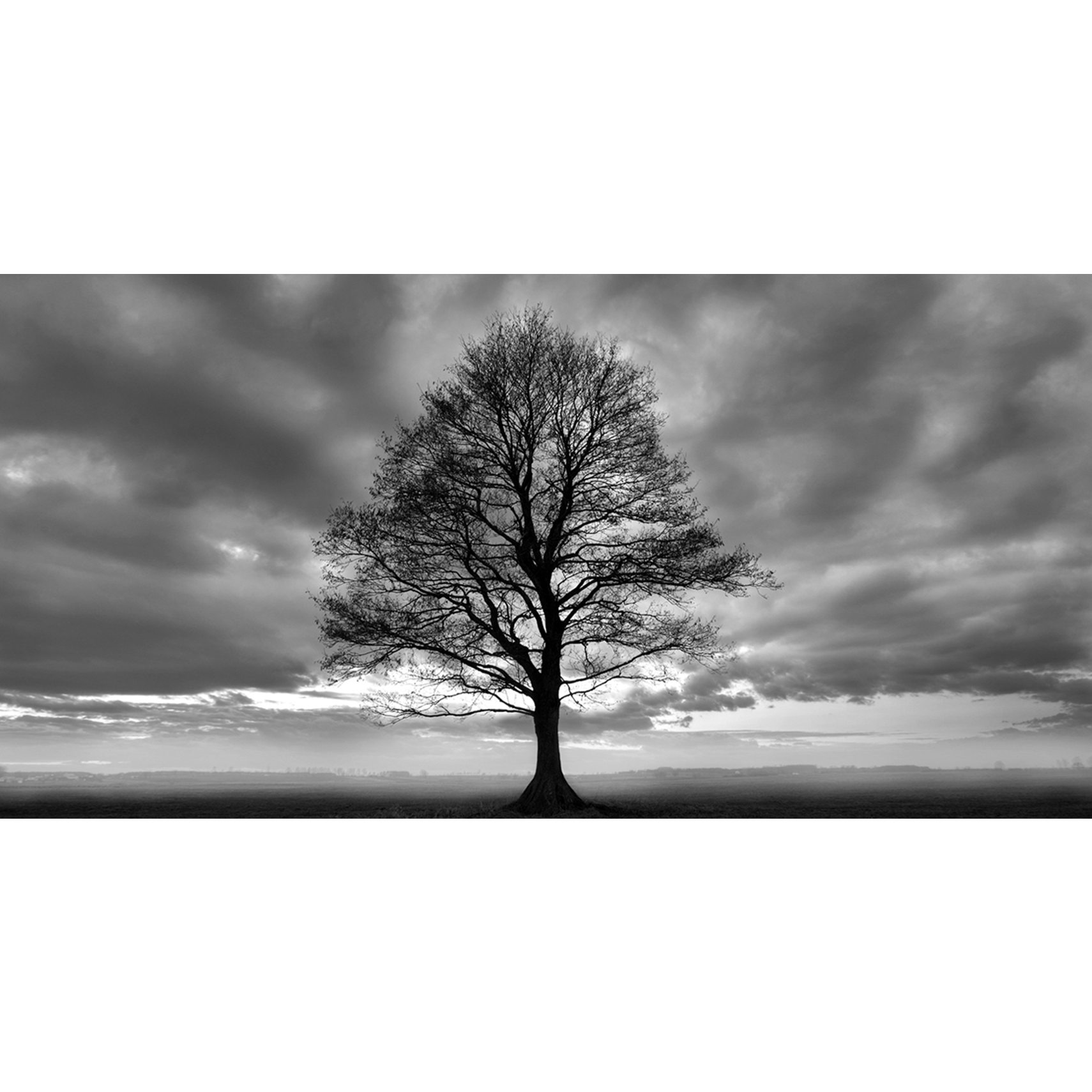 Lonely Tree Fotoprint -