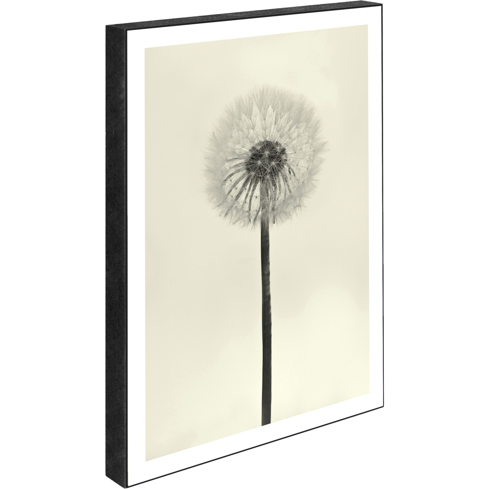 Blocks Skilt 15 x 21 x 2 cm - Dandelion - white