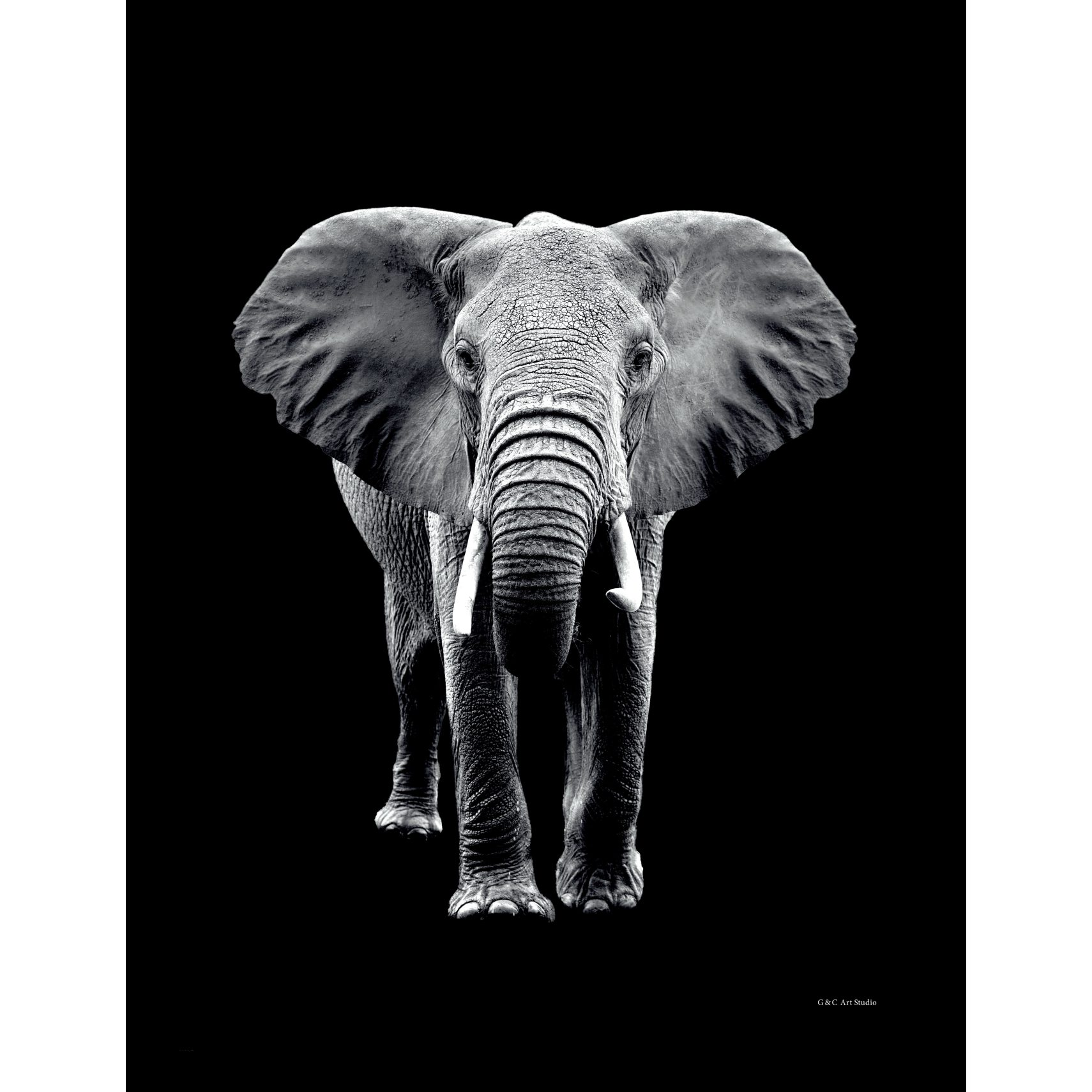 ART GALLERY Plakat 30 x 40 x 1,5 cm - Elephant portrait og ramme i 15 mm sort fyrretræ